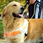 Hilfsmittel Blindenführhund