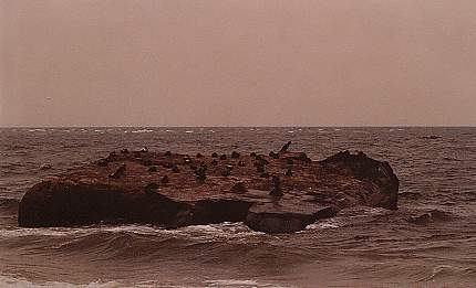 Ein kleiner Felsen vor Skagen, wo Seevögel, Kormorane und Möwen Platz haben.