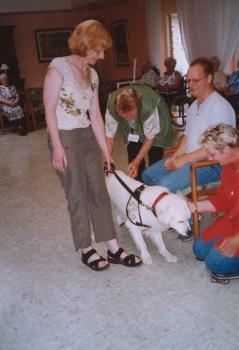 """Ein Hund muss einen """"Überfall"""" von Streicheleinheiten geduldig über sich ergehen lassen."""