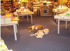 Ablegen der Hunde in einer Buchhandlung in Wuppertal