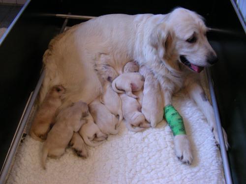 … 9 waren es, obwohl der Tierarzt nur 5 angekündigt hatte