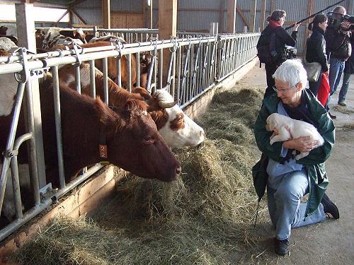 Gerüche und Geräusche im Kuhstall