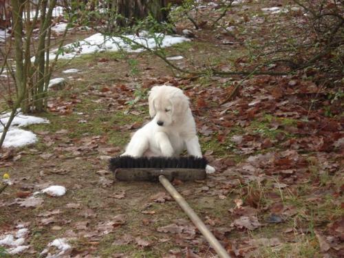 """Selbst ein """"Besentraining"""" sollte erfolgen um die Hunde so sicher wie möglich zu bekommen."""