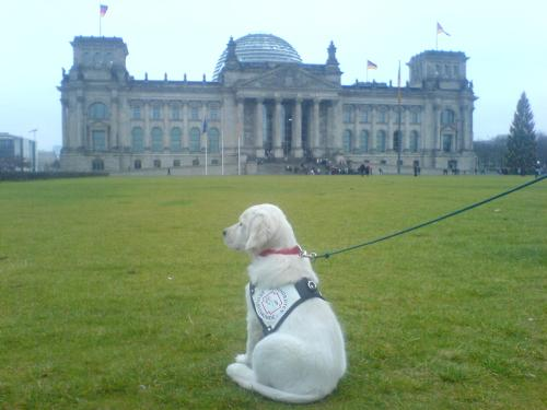 Hier wird gerade ein Fernsehdreh mit einem unserer Hunde vor dem Reichstagsgebäude aufgenommen. Auch diesen Rummel müssen unsere Hunde mit Gelassenheit durchstehen.