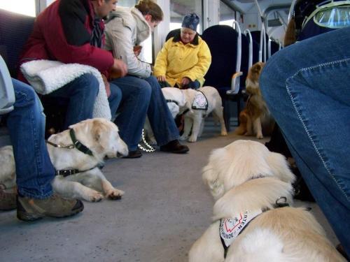Zugtraining mit 6 Monate alten Hunden