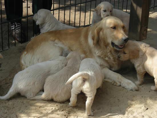 Die geduldige Hundemama mit einigen ihrer kleinen Vierbeiner