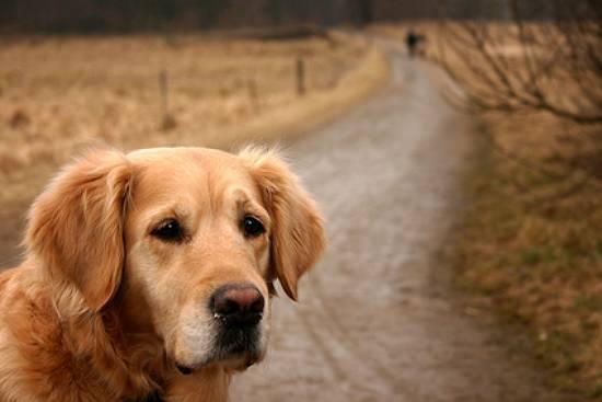 hund weggelaufen