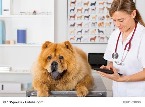 hund regelmässig entwurmen