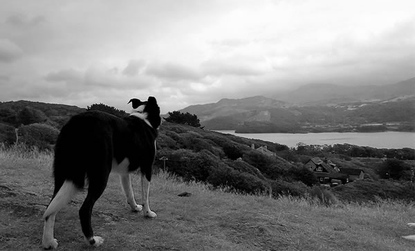 hund-himmel