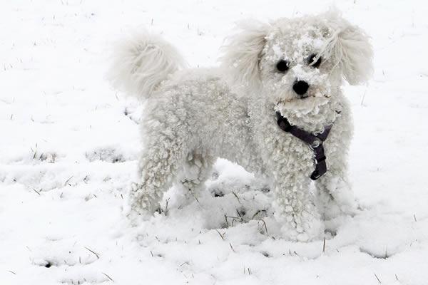 hundepfoten im schnee