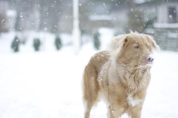hund-schnee