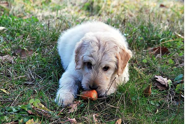 hund vegetarisch füttern