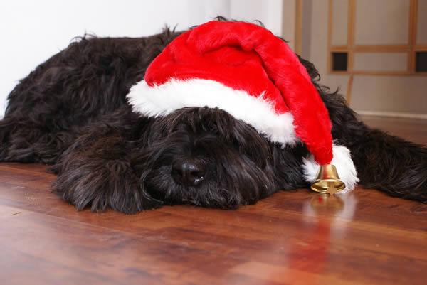 Vorfreude auf leckere Hundeplätzchen