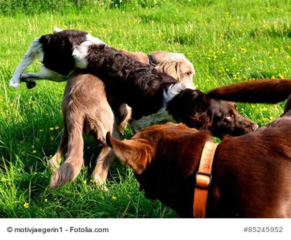 hund toben