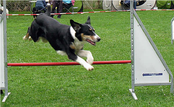 Hundesport Obedience