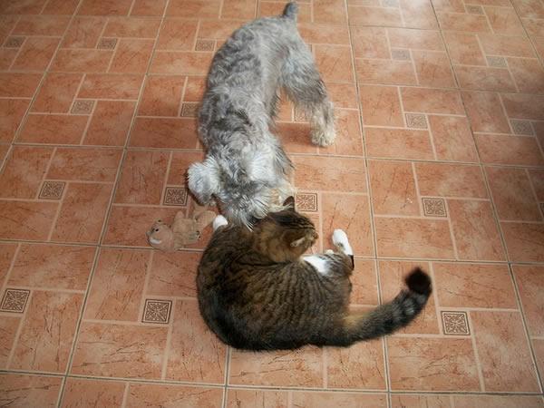 hunde und katzen vertragen sich