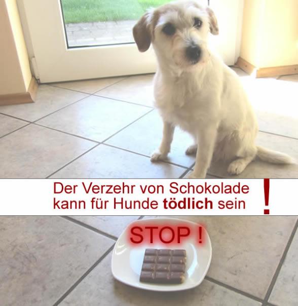 Schokolade kann für den Hund tödlich sein!