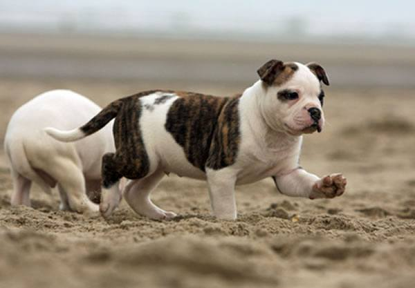 © Dogs - Fotolia.com
