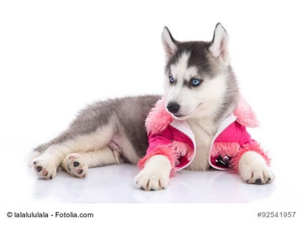 hund-rosa