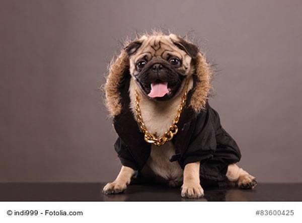 luxus hund