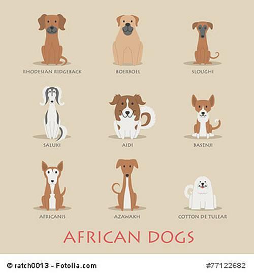 africanis