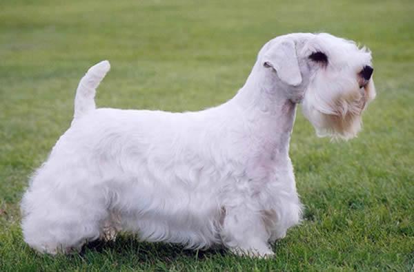 Dog Grooming Haverfordwest