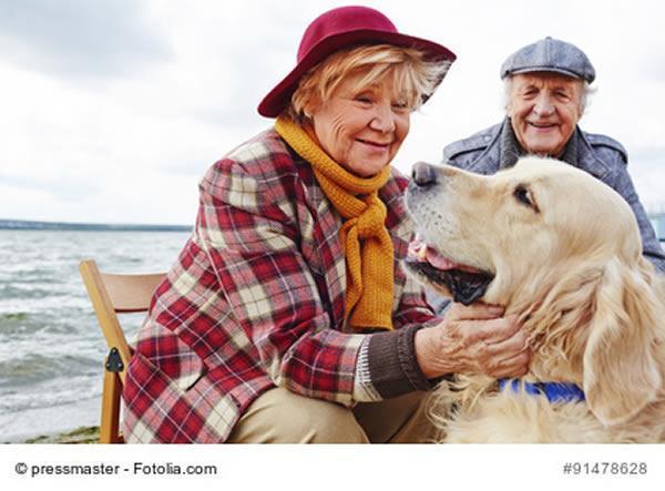 hunde sind beliebte begleiter von älteren menschen