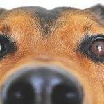 Hundesprache Erklärung