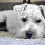 Hundenamen bei Welpen.de finden