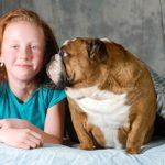 Englische Bulldogge Charakter, Wesen, Bilder