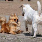Berühmte Hunde: Ali und Rubi