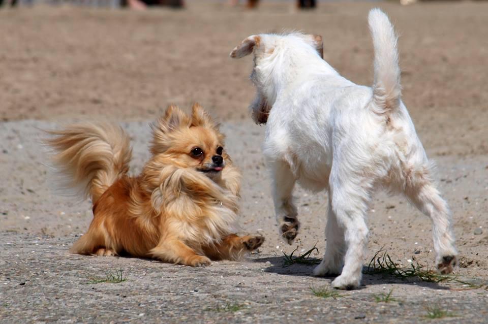 berühmte hunde