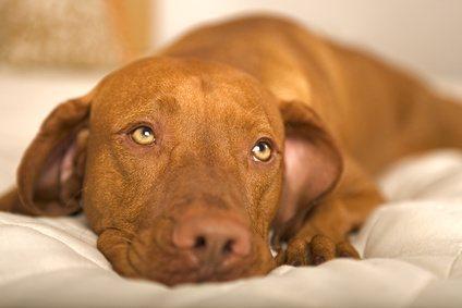 hundebett für grosse hunde