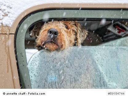 autoschondecken für hunde