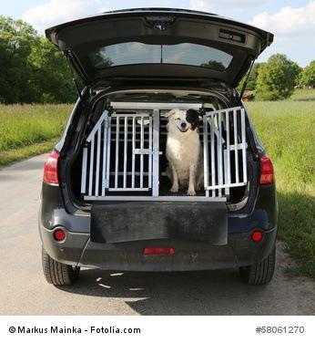 Hundegitter für das Auto
