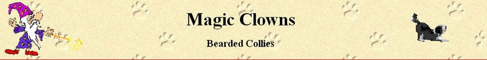 bearded collie welpen aus dem zwinger magic clowns