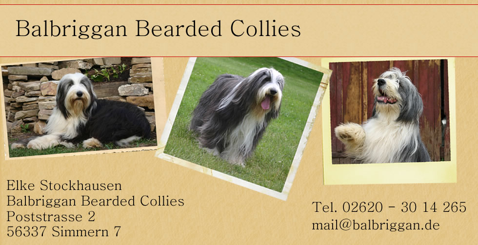 bearded collies aus dem kennel balbriggan