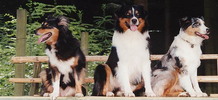 Australian Shepherd Kennel Charming Ghost Aussies